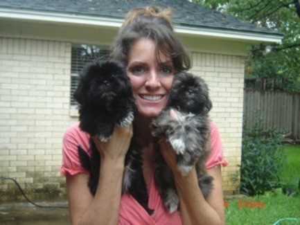 Kortney's Puppies (Shih-Tzu)