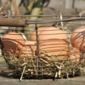 basket of fresh eggs