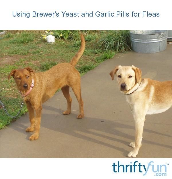 Can Dogs Take Garlic Pills