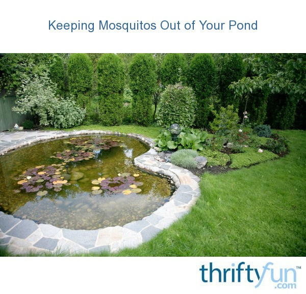 keeping mosquitoes out of a pond thriftyfun
