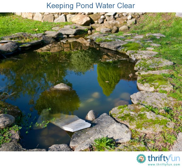 Keeping Pond Water Clear Thriftyfun