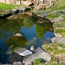 Garden pond tips thriftyfun for Garden pond advice