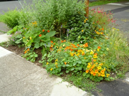 Parking Lot Garden (St Johns, OR)