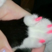 A cat with pink nail caps on.