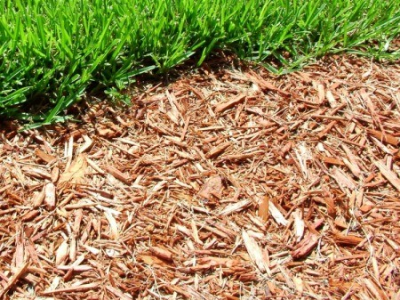 Replacing Grass With Mulch