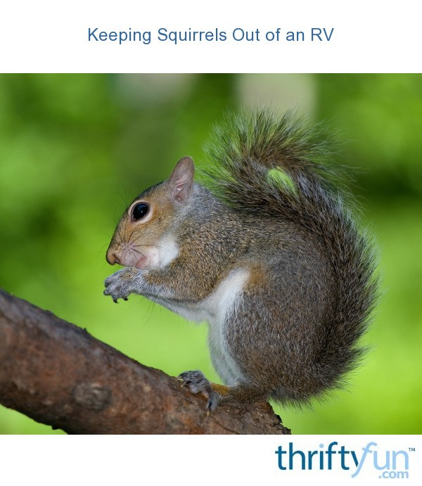Keeping Squirrels Out Of An Rv Thriftyfun