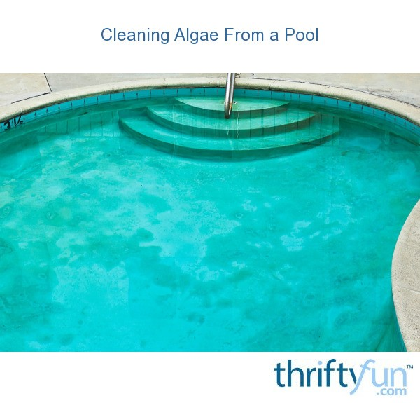 Cleaning algae from a pool thriftyfun for Kill black algae swimming pool
