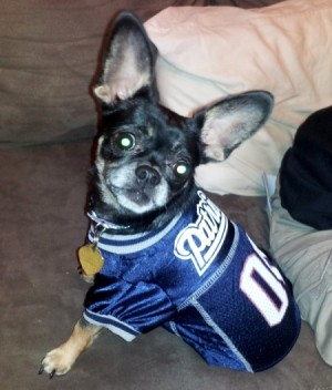 Dog with athletic jersey on.