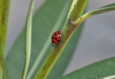 Wildlife: Lady Bug
