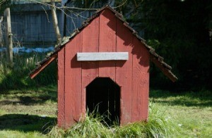 Red wood dog house.