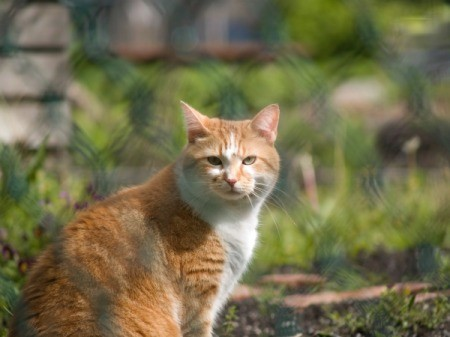 A cat sitting behind a fence.