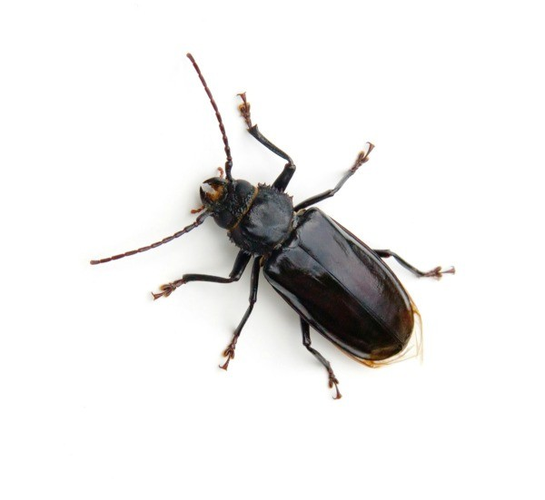 . Getting Rid of Beetles in Your House   ThriftyFun