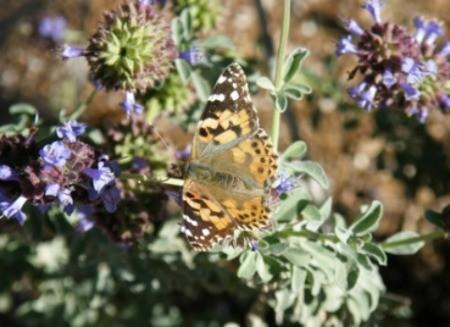 Butterfly pavilion phoenix az thriftyfun for Phoenix butterfly garden