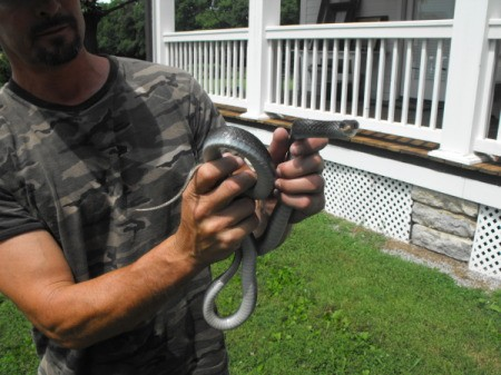 Man hloding a black snake with light belly.