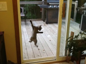 Cat on sliding glass door screen.