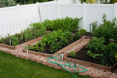 A raised bed garden in the backyard of a rental house.
