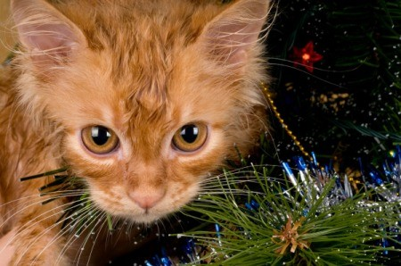 A cat playing in a Christmas tree.