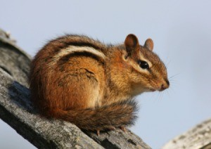 A chipmunk sitting on a brand.