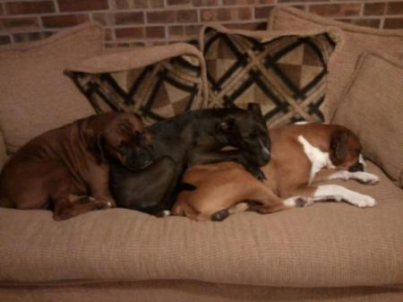 Boxers on the couch.