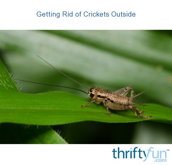 Getting Rid Of Crickets Outside Thriftyfun