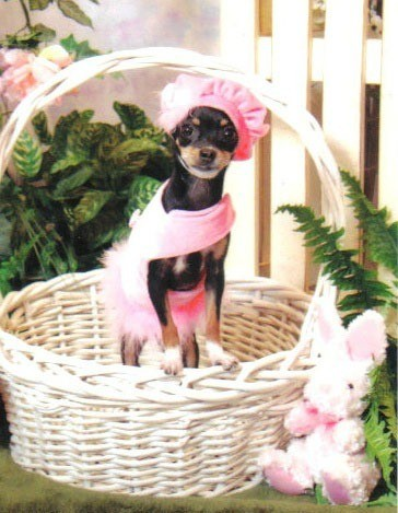 Lwxi in pink outfit in Easter basket.