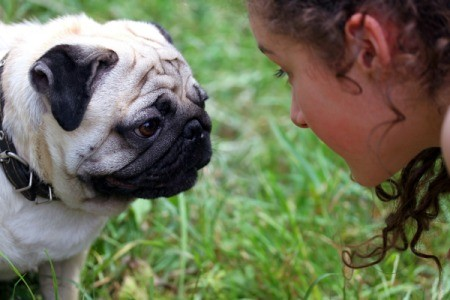 A girl talking to a pug.