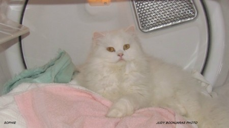 Sophie on pink piece of laundry in dryer.