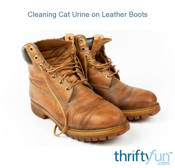 Cleaning Cat Urine On Leather Boots Thriftyfun