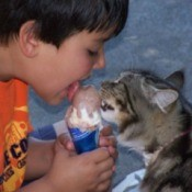 Cat and young boy sharing an ice cream cone.