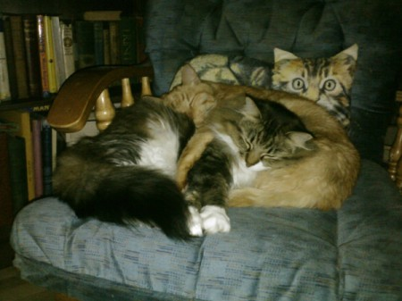 Two cats cuddling on a chair.