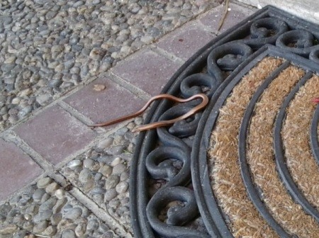 Small brown snake on door mat.