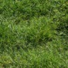 A photo of a grass lawn.