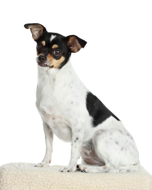 Mixed Breed Family Dogs