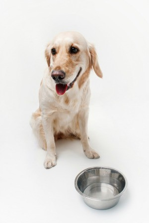 A dog sitting in front of a bowl of water.