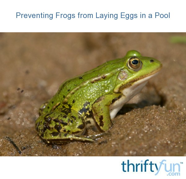 Preventing Frogs From Laying Eggs In A Pool Thriftyfun