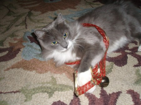 Fuzzy wrapped up in ribbon with a bell attached.
