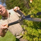 An older man trimming a bush with garden shears.