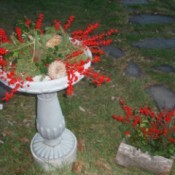 Cement birdbath and planter decorated for the season.