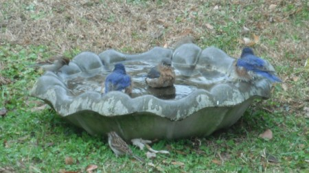 Several birds on bird bath placed on the ground.
