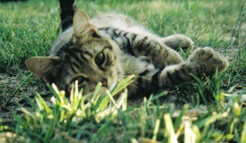 Cat in the grass.
