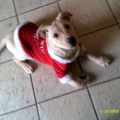 Eli on floor wearing a red sweater.