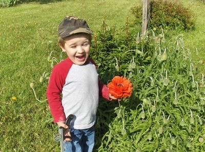 Little boy holding a red poppy.