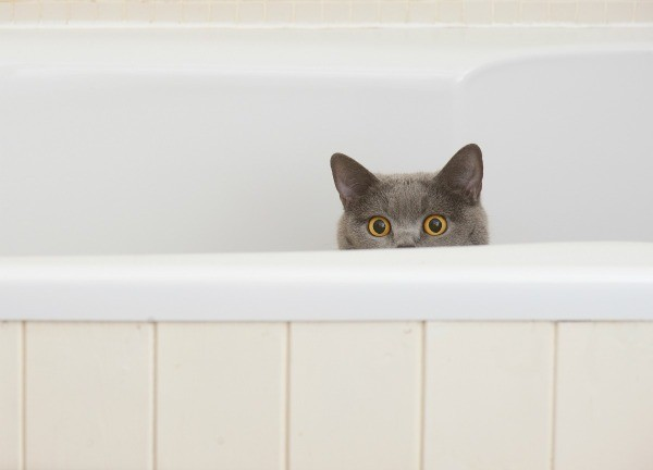 A cat sitting in a bathtub.