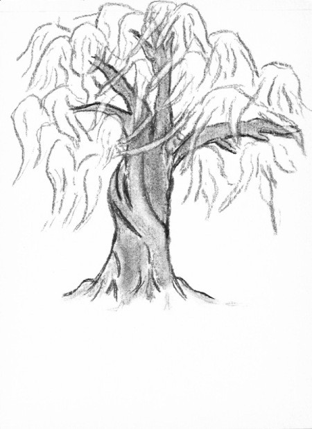 Line drawing of a willow tree.