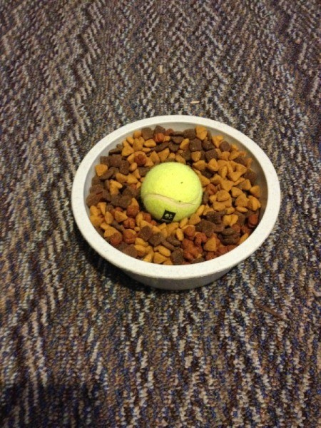 Tennis ball in dog food dish.
