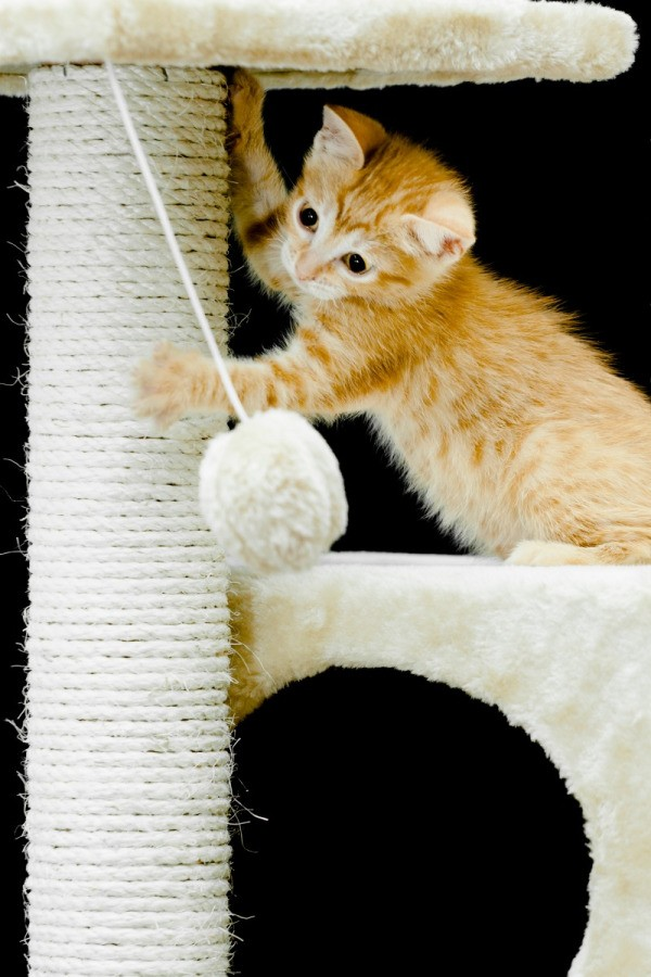 repairing a sisal wrapped cat scratching post thriftyfun. Black Bedroom Furniture Sets. Home Design Ideas