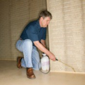 An Exterminator Working in a Basement