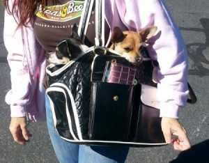 Two dogs in a carrier.