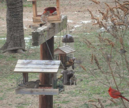 Wild Birds at Feeder