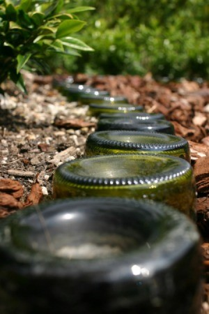 Glass Bottles on Garden Path